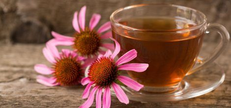 Boost Your Immune System with Echinacea